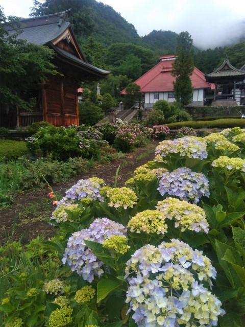 紫陽花と小布施岩松院